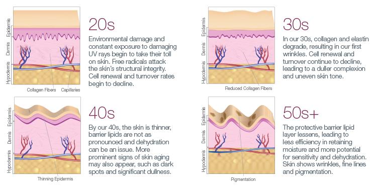 skin-aging-diagram.jpg