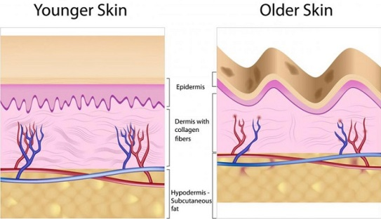 Functions-of-Collagen-for-Skin1.jpg